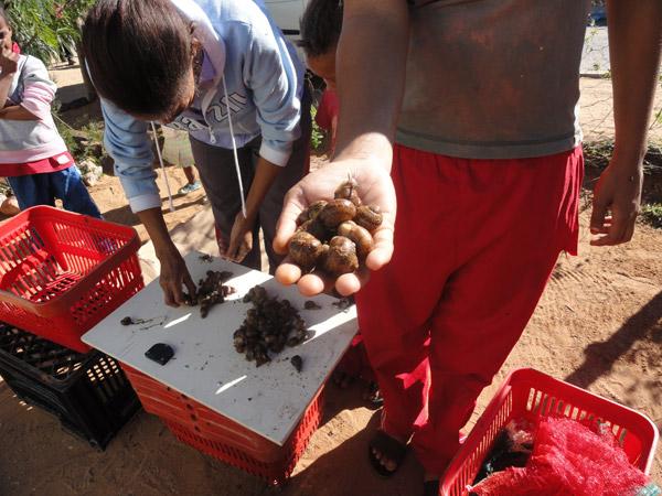 West Coast Snails South African Sdi Alliance