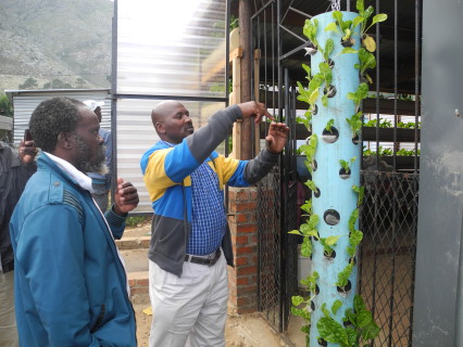 KZN visitors taste Langrug's spinach