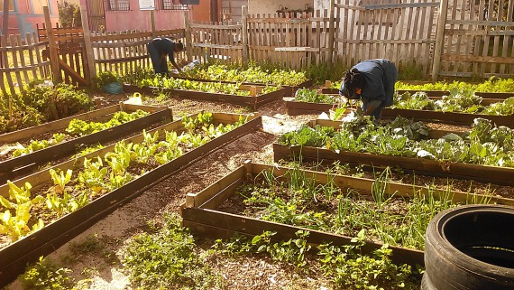 Close to the earth, Nonzukiso and Nono weed garden beds at the Masi Soup Kitchen community garden to make room for a Christmas harvest